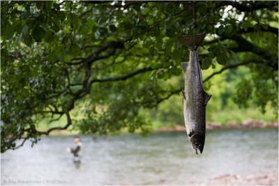 Self limiting beliefs montyrainey for Fish in a tree